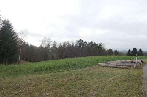 Großzügiges Grundstück in ruhiger Lage - Bauhoffnungsland