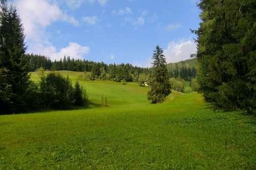 Einzigartiges Grundstück in Rußbach, inmitten der Skiregion Dachstein West!