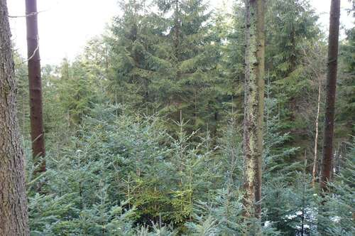 Waldgrundstücke, Nähe Schilift