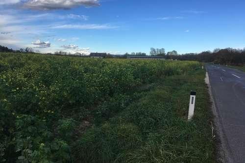 Bauerwartungsland für Betriebsbaugebiet in Dorf an der Pram/Taiskirchen