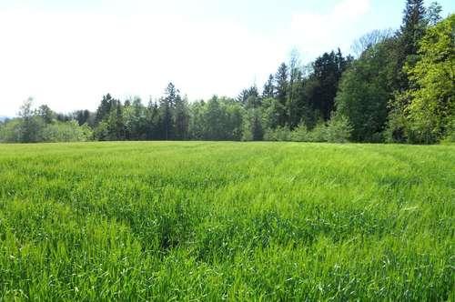 Landwirtschaftliches Grundstück zwischen St. Thomas und Michaelnbach