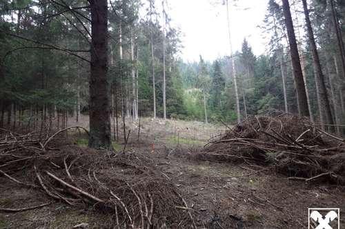 Wald mit Bach - Zufahrtsstrasse mitten durch Idylle ohne Steilhänge