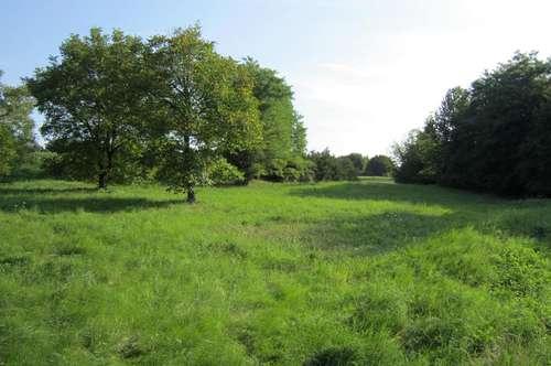 Grundstück mit 4.134m² Grundfläche in leicht erhöhter Südhanglage!