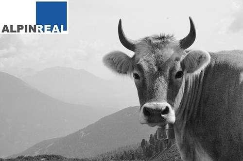 Preisreduziert! Landwirtschaft mit Pensionsbetrieb