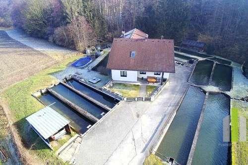 Annerkannter Fischzuchtbetrieb mit geräumigen Herrenhaus auf über 5000m² Grund - OÖ