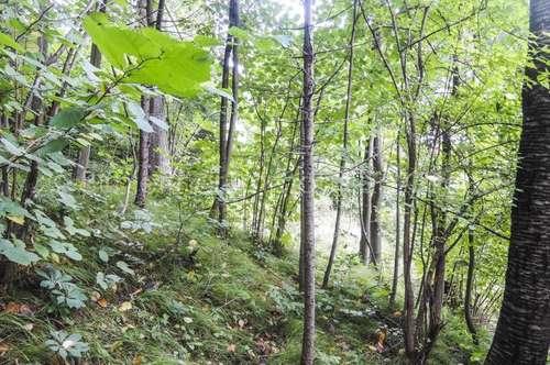 3742 - Baugrund mit eigenem Wald
