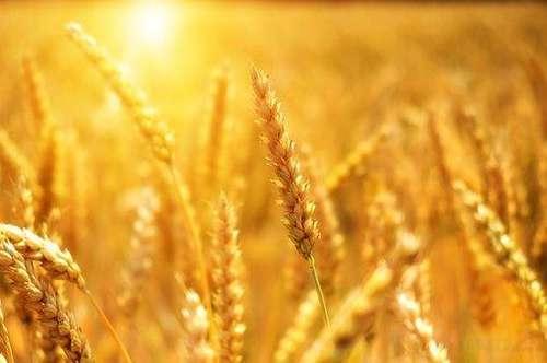 Landwirtschaftliche Nutzung – Acker mit Waldanteil