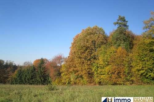 Ca. 2.429 m² Grund in Aussichtslage im Bezirk Jennersdorf