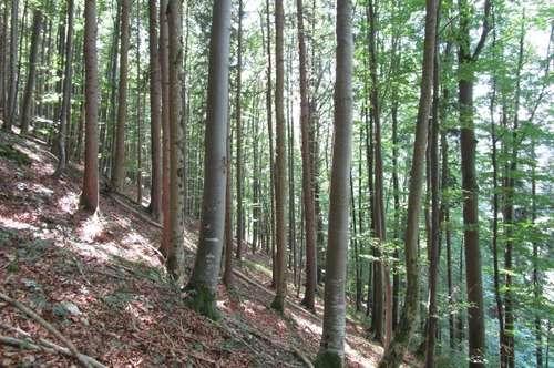 AUF GEHT`S in den eigenen Wald im schönen Almtal! NEUER PREIS !!!