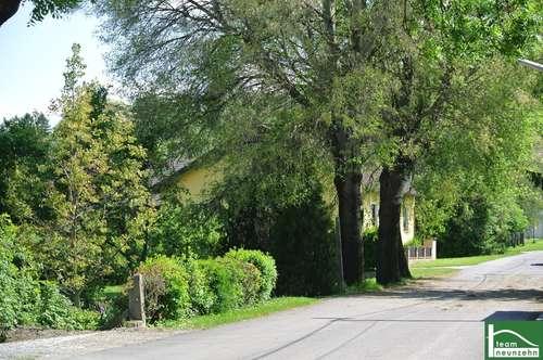 ! Natur Pur- Designervilla mit tollem Garten, 2 Stellplätze! Nähe Korneuburg, A5/ S1 und EKZ G3!
