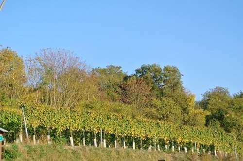 ERSTBEZUG- Doppelhaushälfte- NEU AM MARKT. Sichern Sie sich Ihr Traumhaus mit großem Garten sowie 2 Stellplätze in wunderschöner ruhiger Umgebung