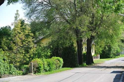 Natur PUR, direkt am Waldrand- Designervilla mit tollem Garten, sowie 2 Stellplätzen! Nähe Korneuburg, Autobahnknoten A5/ S1 und EKZ G3