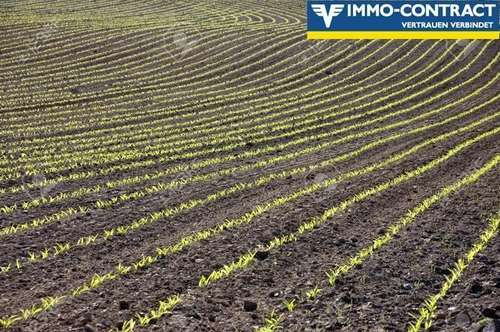 Guter Ackerboden in Wilhering zu erwerben