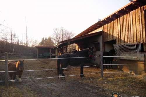 Pferdekoppel zu vermieten!