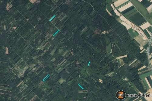 Oberwart: Mischwald auf mehrere Grundstücke
