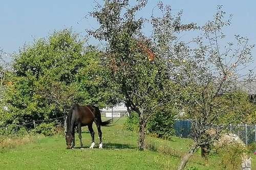 Ideales Wohnhaus für Pferdeliebhaber!