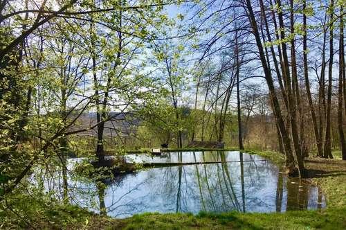 Große Waldfläche mit Teich