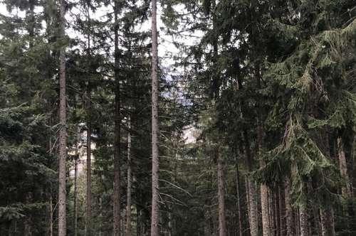 Waldparzelle zu verkaufen