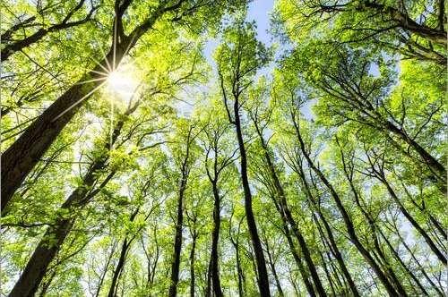 Waldgrundstück Sonnegg, Sittersdorf