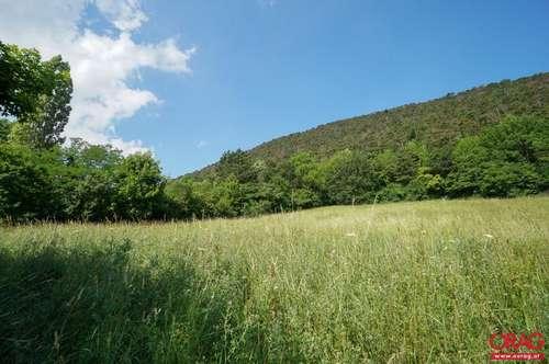 Top Grundstück - Baugrund in 2722 Winzendorf zu kaufen