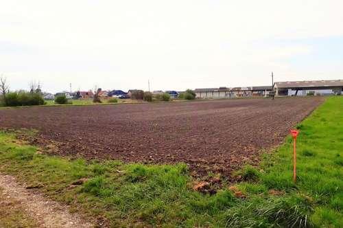 Großflächiges Betriebsgrundstück in Enzersdorf an der Fischa