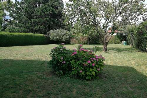 Wunderbarer Garten! Tolle Lage!