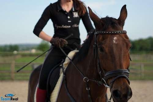Pferdezucht, Springturnier und mehr ...