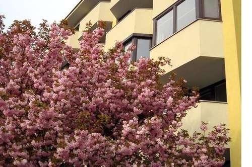 Großzügige 3 Zimmer-Stadtwohnung mit Balkon- zenrale ruhige Lage