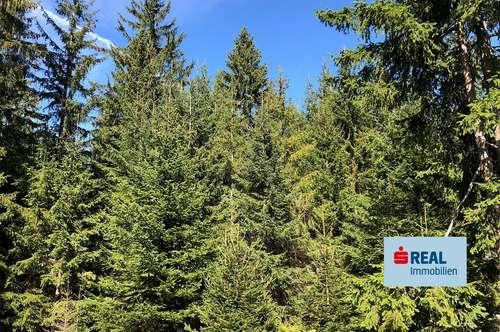 DIE Gelegenheit - Forstwirtschaft im Lesachtal