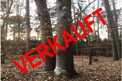 3 ha Wald in guter Lage! VERKAUFT ! VERKAUFT !
