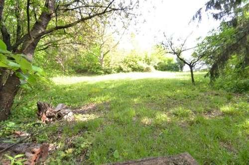Naturnahe und Idyllische Kulisse! 5423qm Grundstück in Höflein an der Donau!