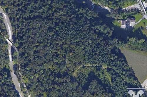 Wald in Strobl / Gschwendt