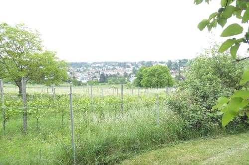 Naturjuwel am Hackenberg
