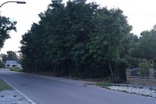 Eckbaugrund mit Baumbestand in Ortsrandlage