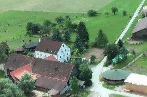 sofort Verfügbar#1,5 Zimmer Wohnung im Grünen#Singlewohnung #IMS Immobilien KG #Niklasdorf