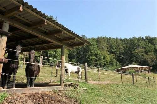 Tier- und Pferdenarren aufgepasst! Nähe Graz