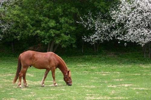 Pferde und Tierhaltung nähe Graz