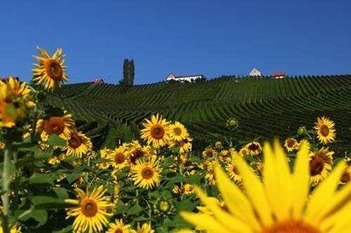 Landwirtschaftliche Liegenschaften in der Süd / Weststeiermark