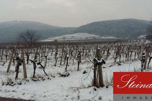11ha großes Weingut mit exklusivem Heurigenbetrieb, ca. 20km südlich von Wien