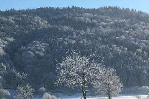 Waldfläche Langer Bühel; Kuchl