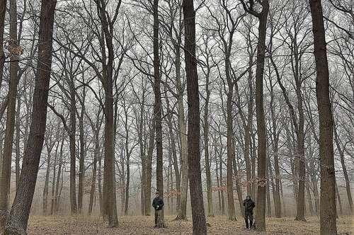 Eichenwald 53,7 ha großer Wald 40 km nördlich von Wien