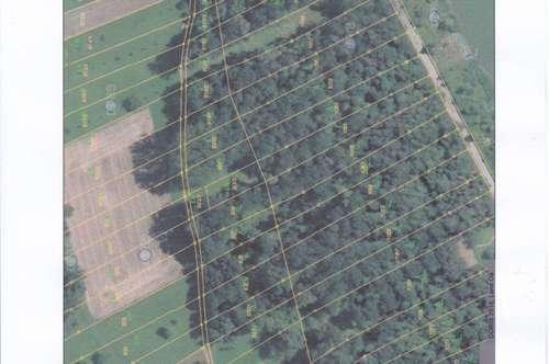 Landwirtschaftliches Grundstück mit Wald