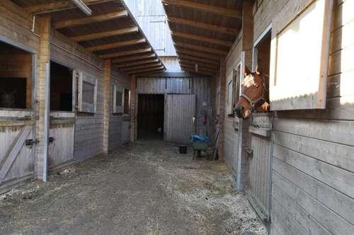 Gestüt / Pferdestallungen in Hohenruppersdorf