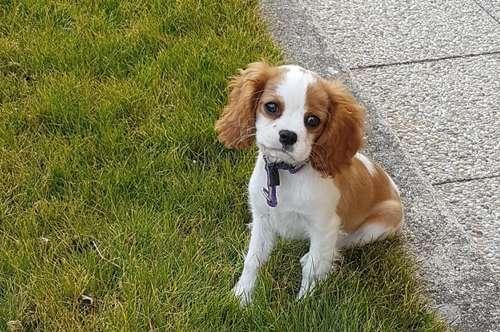 Ihr Hund wird Sie dafür lieben! (Info-Video siehe Text)