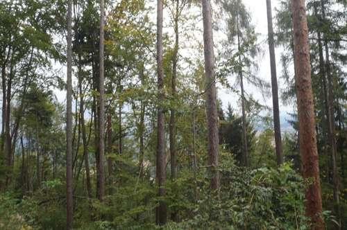 Waldfläche Nähe Eberndorf