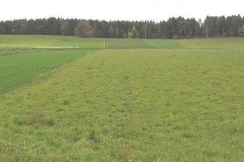 6.500 m² ebener Grund davon 2000 m² Baugrund, Fürnitznähe