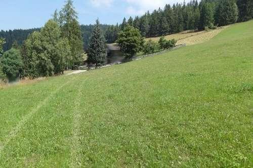 22.000 m² Grund davon 2.000 m² Baugrund, Feldkirchen 15 Automin.