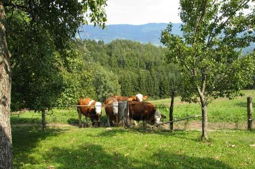 ECHTE RUHIGE ALLEINLAGE: Alter Bauernhof in Görtschitztal in 1000 m Seehöhe,