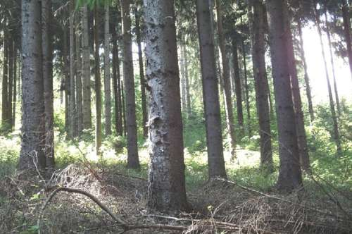 Wald 41 HA ZU VERKAUFEN in Lavantal