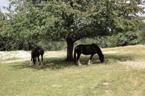 ALLEINLAGE: Alter Bauernhof  in 1000 m Seehöhe, absolute Ruhelage ohne Nachbar